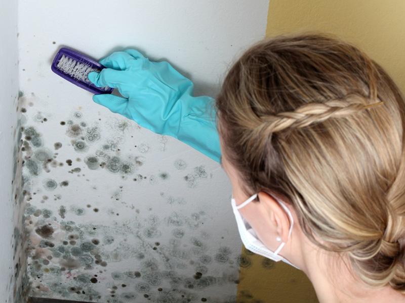 Как удалить сырость и плесень на стенах и потолке
