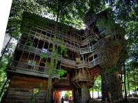 Многоэтажный дом на дереве