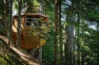 Круглый дом на дереве фото инерьера