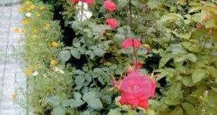 Гравийный садовый бордюр